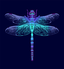 Dragonfly. Seamless Pattern. Dark blue backgrounds. Summer night.