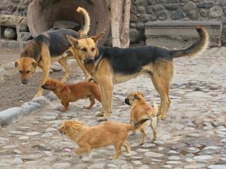 Família canina na rua