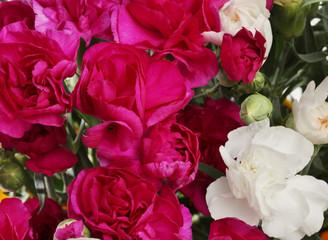 Flower Carnations bouquet background.
