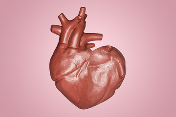 A human heart in a heart shape. Part of anatomy human body model with organ system