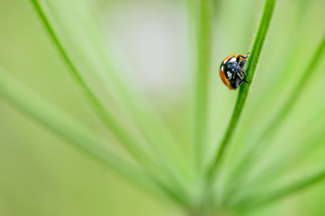 macro of ladybug on green leaf