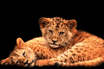 Poster - Two baby lions with black background