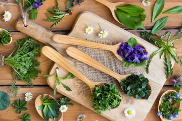 Wild edible spring herbs on wooden spoons Wall mural