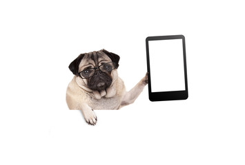 pug puppy dog with glasses holding up blank tablet or mobile phone, hanging on white banner, isolated