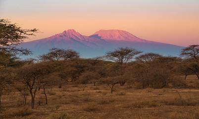 Kilimanjaro im Morgenlicht Wall mural