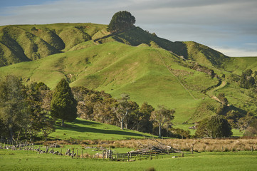 View from Highway 1 near Te Ohaki showing typical volcanic landscape, Waikato, North Island, New Zealand, Pacific