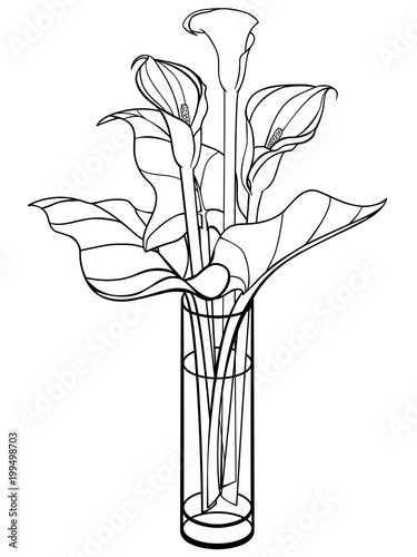 Callas In A Vase Calla Lily With Leaves Flowers In A Glass Vase