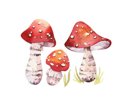 Watercolor bohemian forest mushrooms poster, woodland isolated amanita illustration, fly agaric, boletus, orange-cap boletus mushroom decoration.