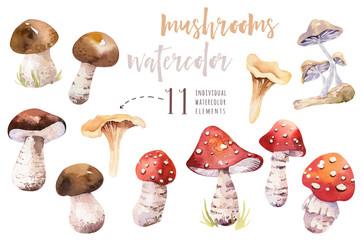 Wall Mural - Watercolor bohemian forest mushrooms poster, woodland isolated amanita illustration, fly agaric, boletus, orange-cap boletus mushroom decoration.