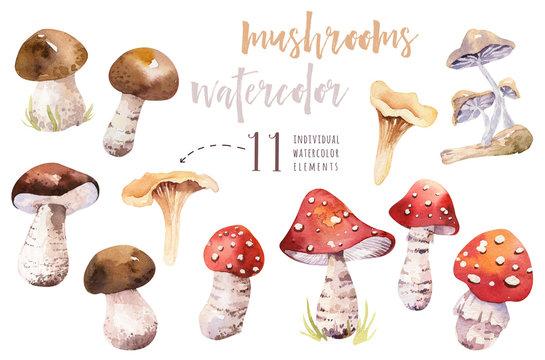 Watercolor bohemian forest mushrooms poster, woodland isolated amanita illustration, fly agaric, boletus, orange-cap boletus mushroom decoration.