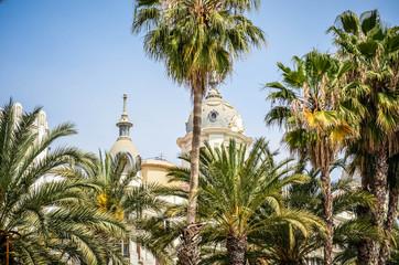 Alicate - Palms