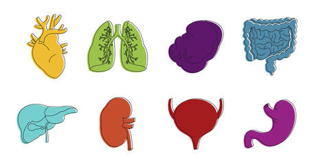 Internal organs icon set, color outline style