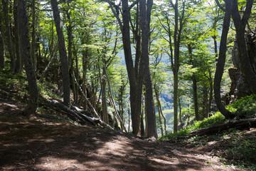 Hilltop forest views