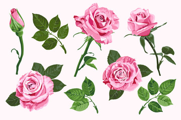 Pink vector roses elements set isolated on the white background