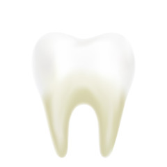 Realistic white healthy tooth on white background. Vector illustration. Tooth 3d