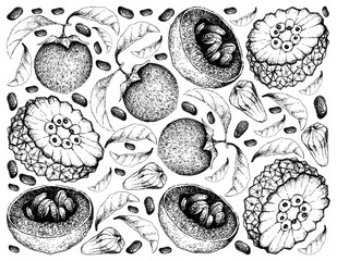 Hand Drawn Background of Australian Black Sapote and Pindaiva Fruits
