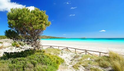 Strand mit Dünen und Pinien