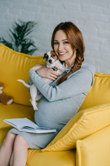 attractive pregnant woman hugging jack russell terrier in living room