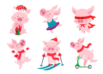 Set of cute pigs. Symbol of the Chinese new 2019 year.