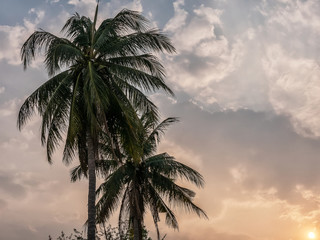 coconut palm trees leave at sunset with sky background, summer tropical landscape background