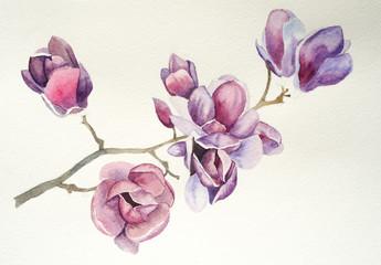 Magnolia flower watercolor