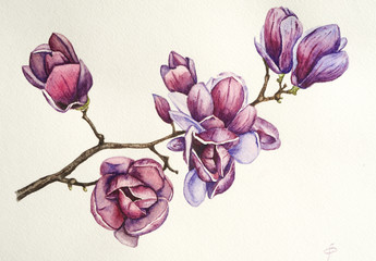 Magnolia flower watercolor