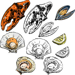 Mussels, oysters and crayfish on white background.