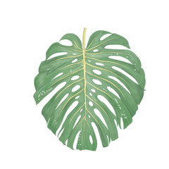 Tropical floral jungle leaf