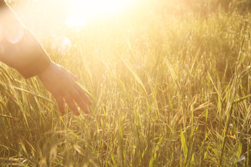 Close up of a woman's hand touching golden grass during sunset.