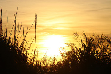 image of sunset and reeds silhouette