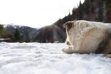 Dog Looking into the Racatau Valley