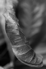 Black and white leaf vertical close up photography with space for text.