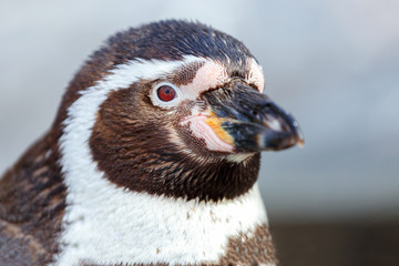 Portrait of a penguin