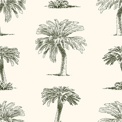 Pattern of the tropical palm trees