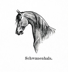 Horse with swan neck (from Meyers Lexikon, 1896, 13/770/771)
