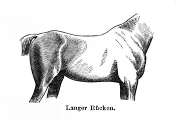 Long back in horse (from Meyers Lexikon, 1896, 13/770/771)
