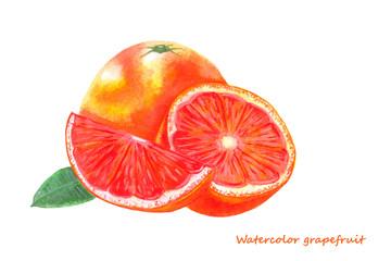 Watercolor grapefruit. Isolated citrus fruit illustration on white background