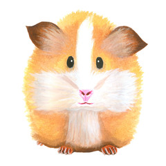 Watercolor guinea pig. Animal. Rodent. Hand drawn pet illustration