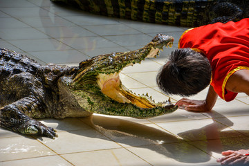 Autocollant pour porte Crocodile
