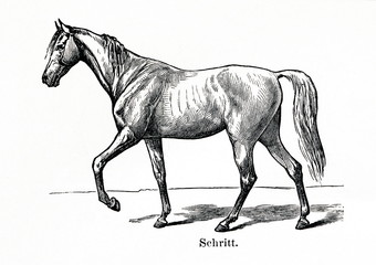 Horse gait - walk (from Meyers Lexikon, 1896, 13/770/771)