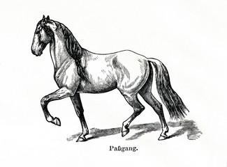 Horse gait - pace (from Meyers Lexikon, 1896, 13/770/771)