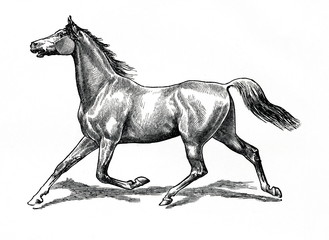 Horse gait - extended trot (from Meyers Lexikon, 1896, 13/770/771)