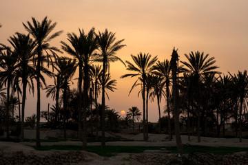 Sunset on Palm Trees, Qeshm, Iran