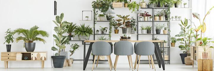 Bright interior with plants