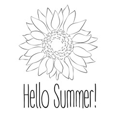 Hello Summer! Sunflower Vector illustration on white background