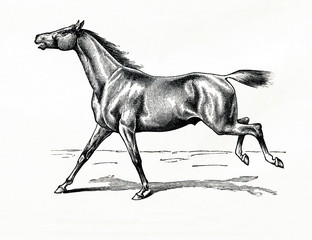 Horse gait - stretched gallop or karriere (from Meyers Lexikon, 1896, 13/770/771)