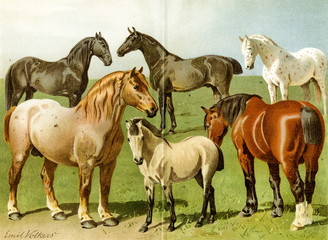Horse breeds II (from Meyers Lexikon, 1896, 13/772/773)