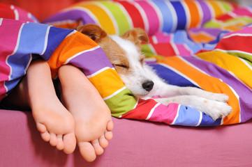 Schlafender Hund im Bett