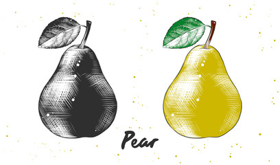 Vector engraved style illustration for posters, decoration and print. Hand drawn sketch of pear in monochrome and colorful. Detailed vegetarian food drawing.