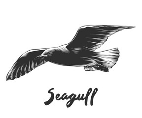 Vector engraved style illustration for posters, decoration and print. Hand drawn sketch of seagull in monochrome isolated on white background. Detailed vintage woodcut style drawing.
